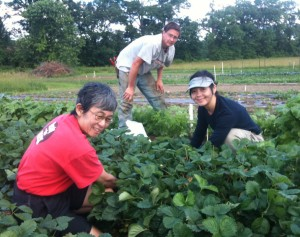 Strawberry gleaning in Tillson, June, 2010