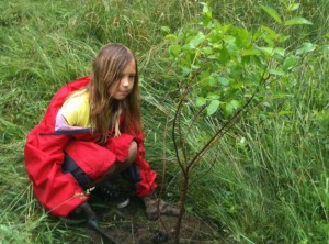 Faye Higgins, age 10, plants a tree