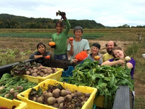 Gleaning at Whirligig Farm, September 2014