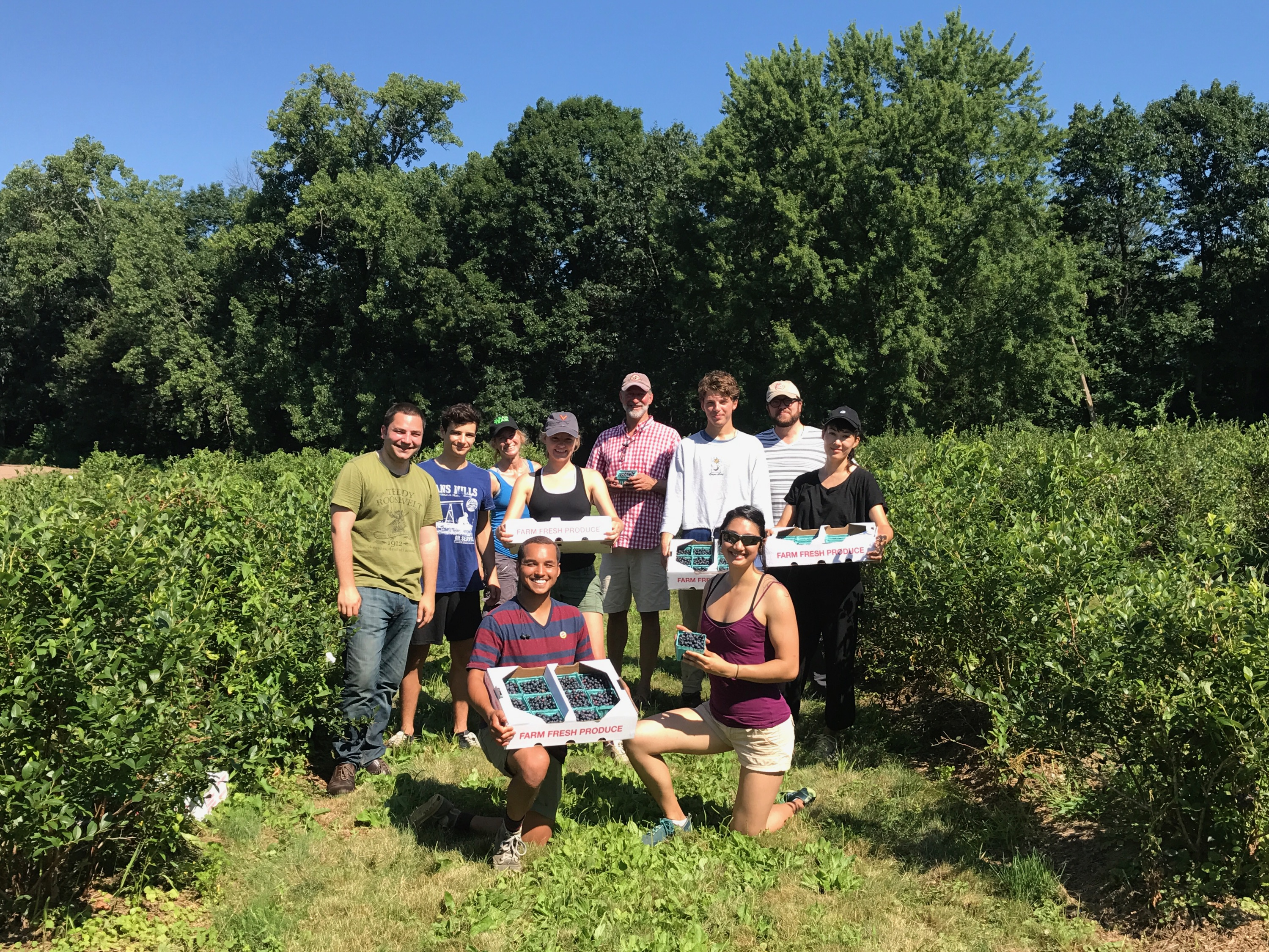 Farm to Food Pantry Blueberry Gleaning